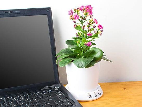 Цветочный горшок с USB