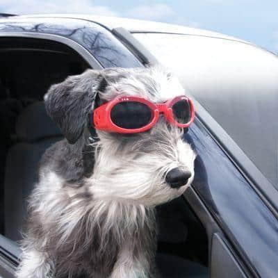 Защитные очки для собак
