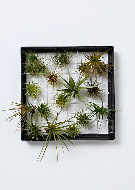 Airplantframe