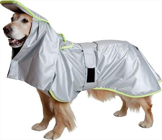 disaster-proof coat for dog
