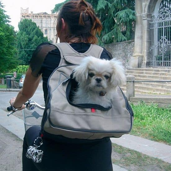 XPack Pet Carrier