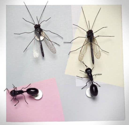 Insect Push Pins