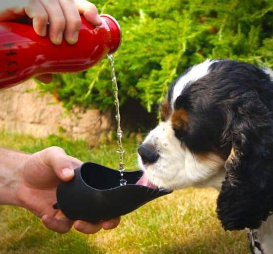 Travel Water Bottle For Dogs