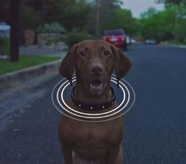 Умный ошейник для собак DogTelligen