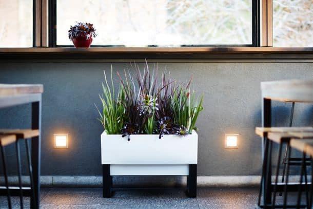 Домашний сад Glowpear