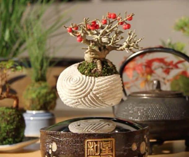 Левитирующее дерево Бонсай Air Bonsai