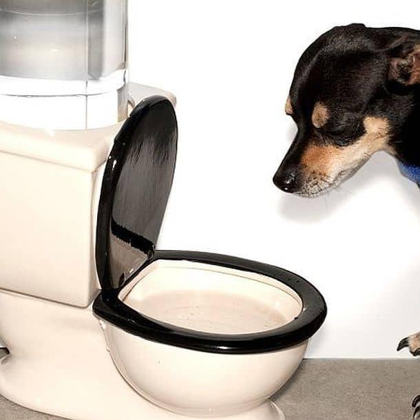 Поилка для собак в виде унитаза купить сантехника все в домашних условиях