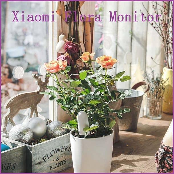 Умная система мониторинга комнатных растений Xiaomi