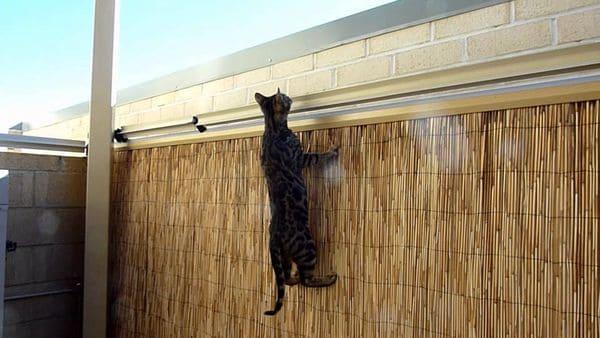 Непреодолимый барьер для кошек Oscillot