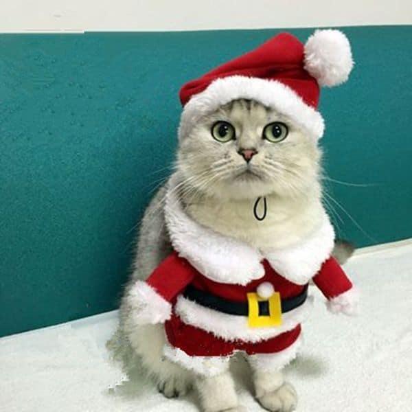 Новогодний наряд для собак и кошек