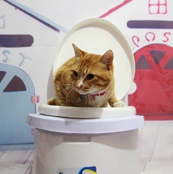 Лоток на унитаз для приучения кошек к туалету