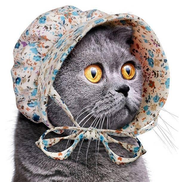 Чепец для кошек