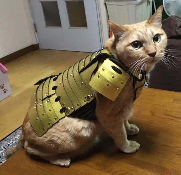 Декоративная самурайская броня для кошек и собак