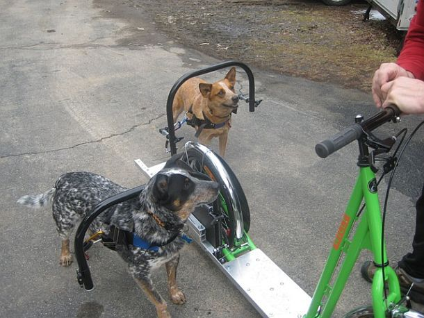 Собачья упряжка для самоката Dog Powered Scooter