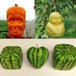 Приспособления для формовки выращиваемых фруктов и овощей