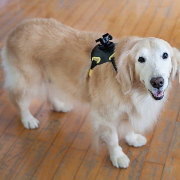 Крепление для установки экшн-камеры на собаку