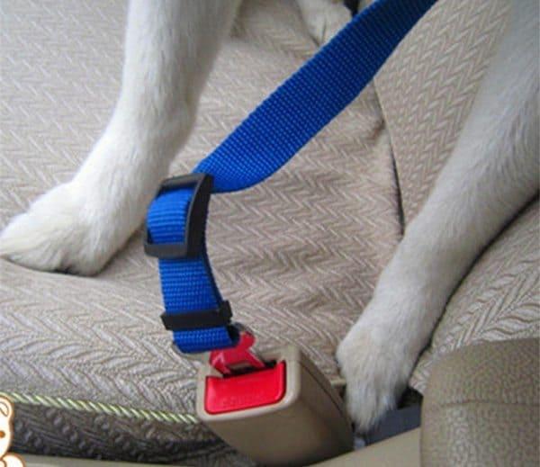 Поводок для безопасной перевозки собак в салоне авто