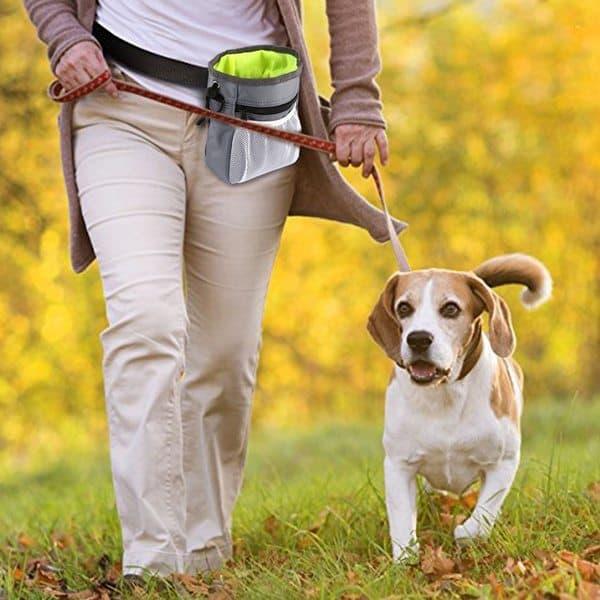 19 самых нужных вещей с Aliexpress для собаководов