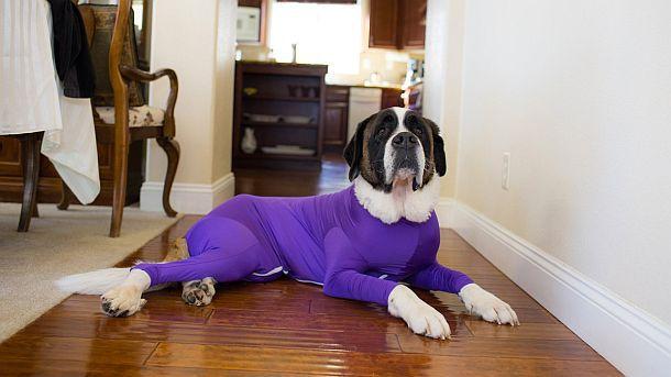 Комбинезон для собак, защищающий помещения от выпадающей шерсти Shed Defender