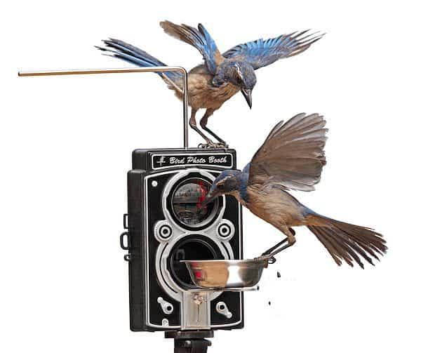 Кормушка для птиц с фотоловушкой Bird Photo Booth 2.0