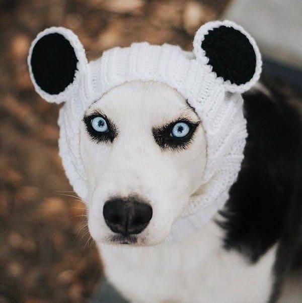Шапочка для собак с ушками панды