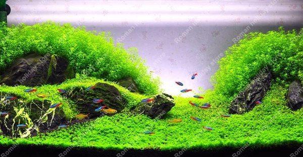 Семена для выращивания подводной лужайки
