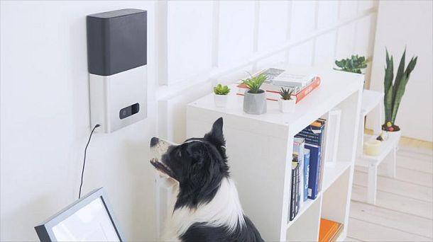 Умная кормушка для собак PetCube Bites с дистанционным управлением