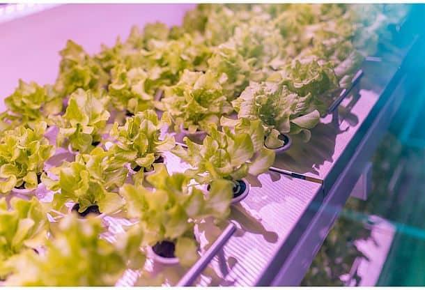 Умный домашний огород Smart Farm