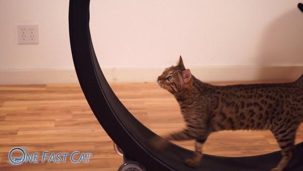 Фитнес-колесо для кошек