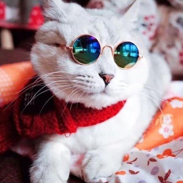 Солнцезащитные очки для кошки