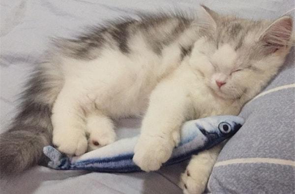 20 самых полезных кошачьих товаров с Aliexpress