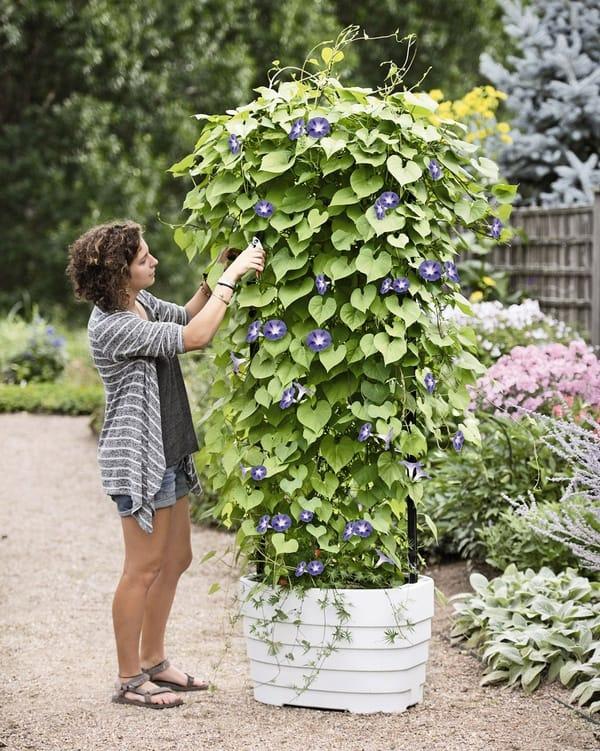 Вертикальная основа для выращивания красивых кустов от Gardener Revolution