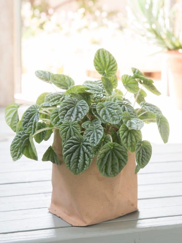 Итальянские кожаные мешки для растений в горшках