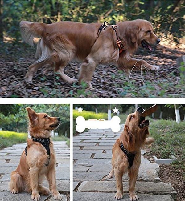 Дышащая упряжка Truelove Front Range Dog