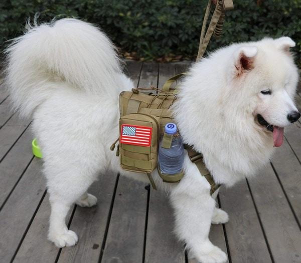 Тактический жилет для собак Jasgood
