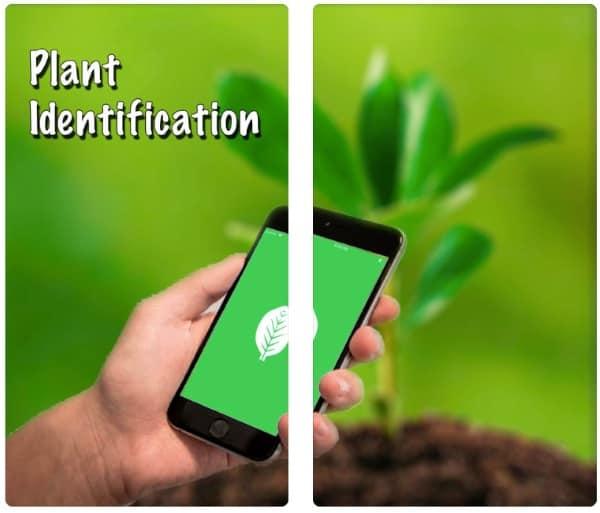 WildPlantID - приложение для распознавания растений