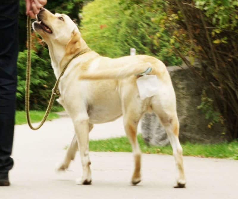 Прицепной пакетик для сбора собачьих экскрементов