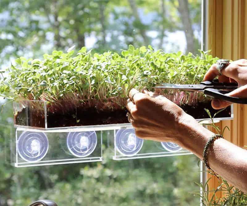 Контейнеры для рассады с креплением на оконное стекло Grow 'n Serve