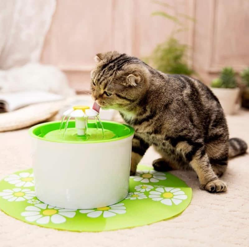 Питьевой фонтанчик для домашних животных