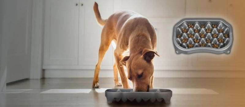 Миска для медленного кормления собаки