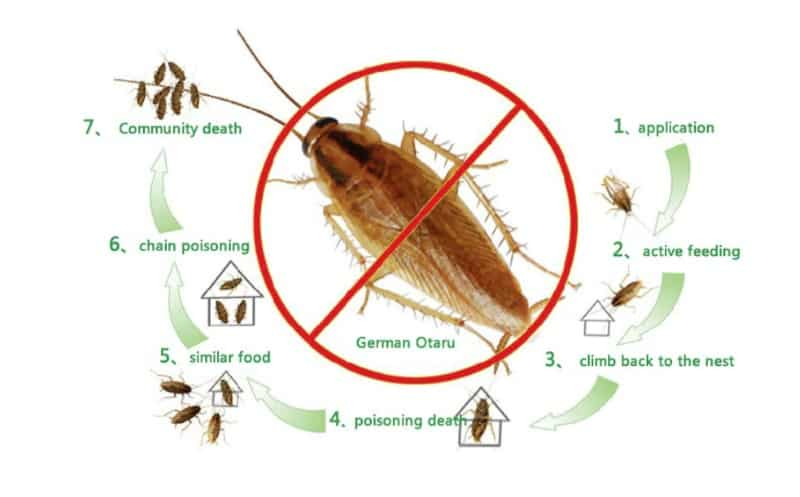 Порошок цепного действия для борьбы с тараканами