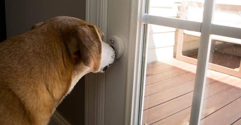 Дверной звонок для собак от Mighty Paw