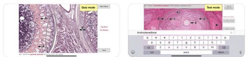 Histo! - приложение для изучения гистологии