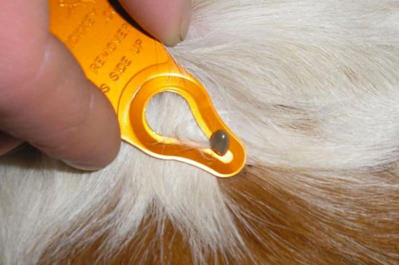 Приспособление для удаления клещей Tick Key