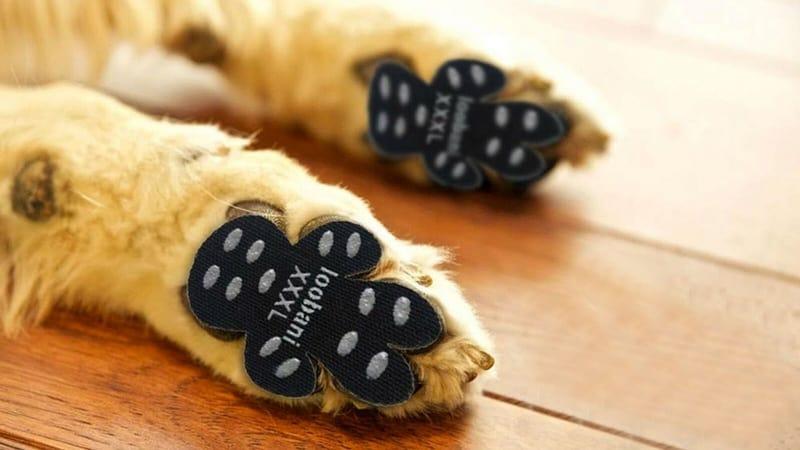 Наклейки для защиты собачьих лап от скольжения