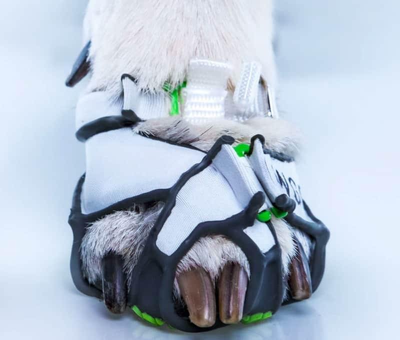 Сандалии для собак Clawgs