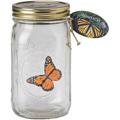 Бабочка-монарх в стеклянной банке