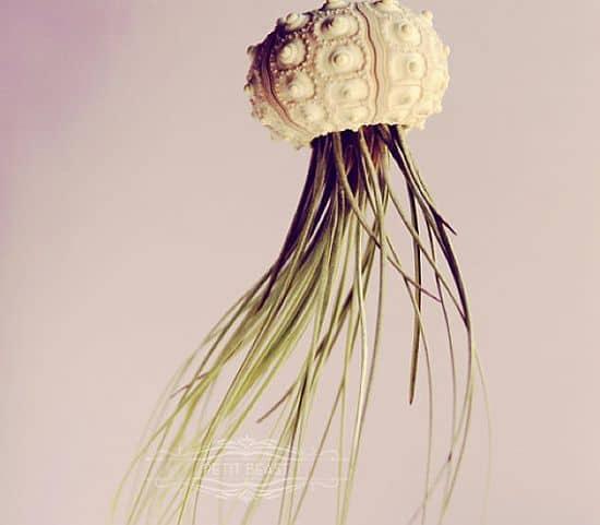 Hanging Jellyfish Plants