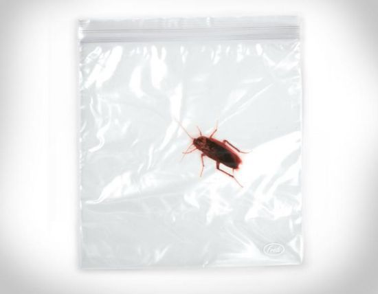 Sandwich Bags With Bugs